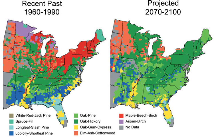 Climate Impacts on Forests | Climate Change Impacts | US EPA
