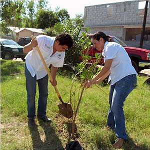 Reforestation Project in Matamoros, Taumalipas