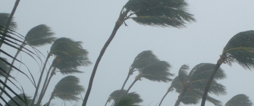 Photo of palm trees in storm