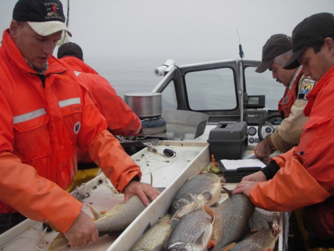 Men on a boat studying fish for contamination
