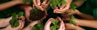 Image of hands holding seedlings