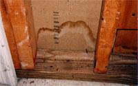 Water stain on a basement wall — locate and fix the source of the water promptly.