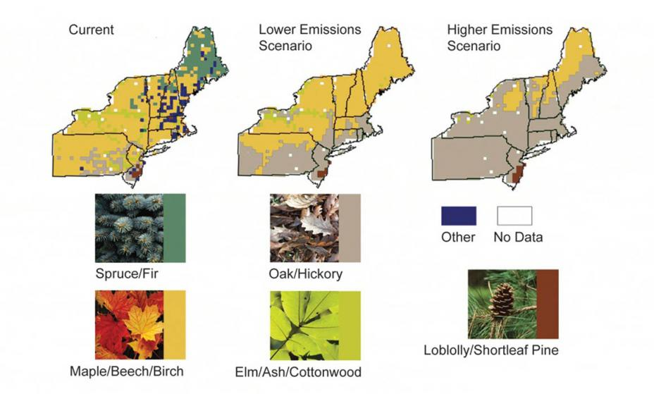 Distribution of trees in the Northeast under current conditions, a lower emissions scenario, and a higher emissions scenario. Both scenarios project significantly less diversity than the current conditions, with a complete loss of Spruce and Fir trees.
