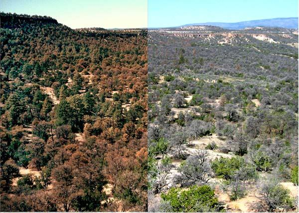 Two side by side photographs of a forested region. The photo on the left shows a combination of green and reddish trees. The photograph on the right shows many leafless grey trees.