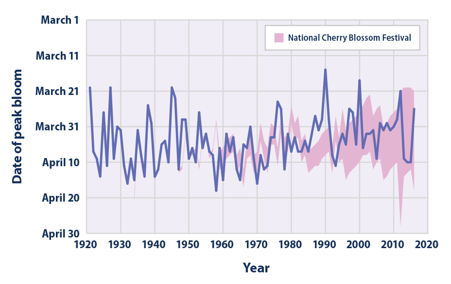 Line graph showing the annual peak bloom date of Washington, D.C.'s cherry trees from 1921 to 2016. The timing of the annual National Cherry Blossom Festival is shown for reference.