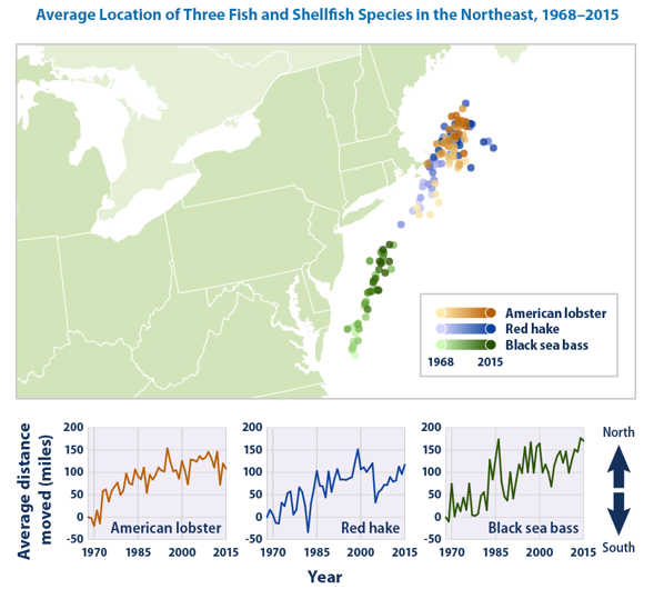 Map Showing American Lobster Red Hake Black Sea Bass Migration Up The East Coast