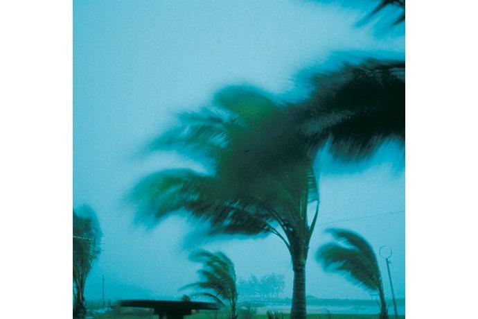 Photo of windswept palm trees