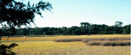 Marsh with wetland grass