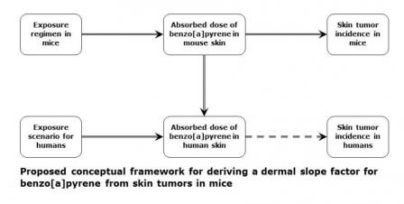 This diagram shows the process for deriving a dermal slope factor from skin tumors in mice.