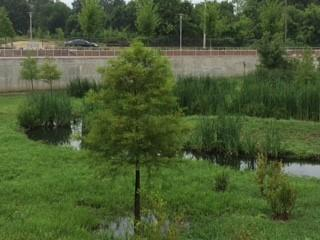 EPA's Clean Water State Revolving Fund helped the City fund this $4 million dollar project that transformed a brownfield site into a wetland that treats storm water.