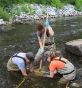 Macroinvertbrate sampling conducted in June 2012 (Housatonic River 1½ Mile)